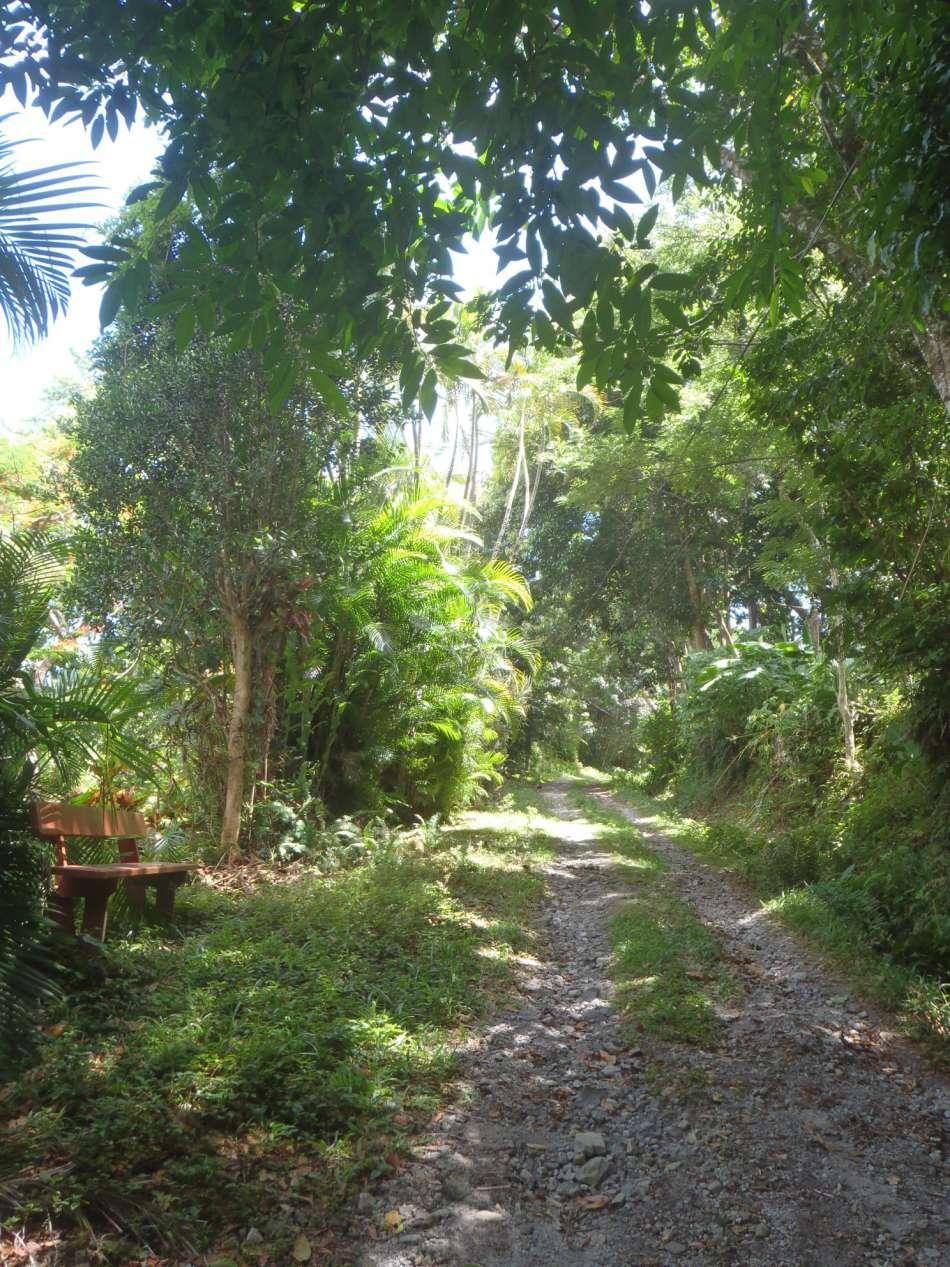 Dominica | Unterwegs auf dem WNT - Segment3 | © Tamarind Tree Hotel