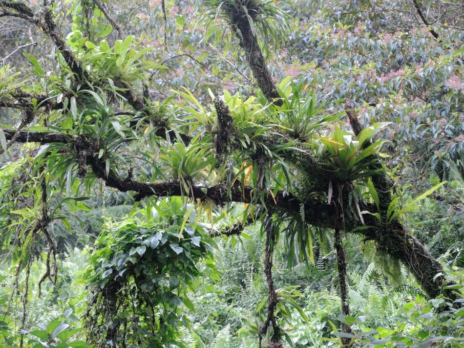 Dominica | Unterwegs auf dem WNT - Segment10 | © Günter Klos