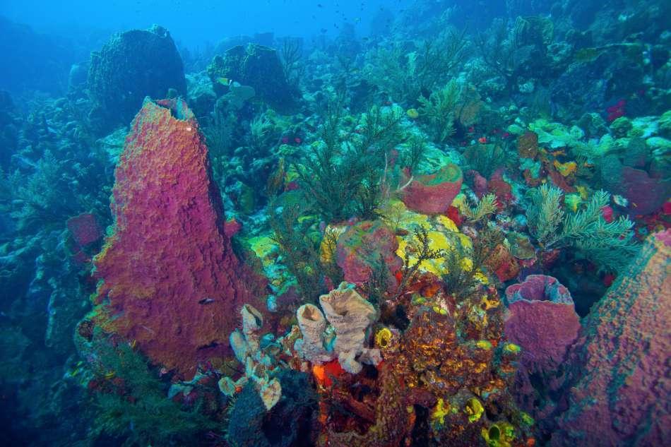 Dominica - Unterwasser | Rifflandschaft | © Dive Dominica